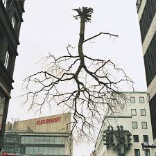 Charlotte Gyllenhammar träd